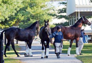 Fasig Tipton Horses